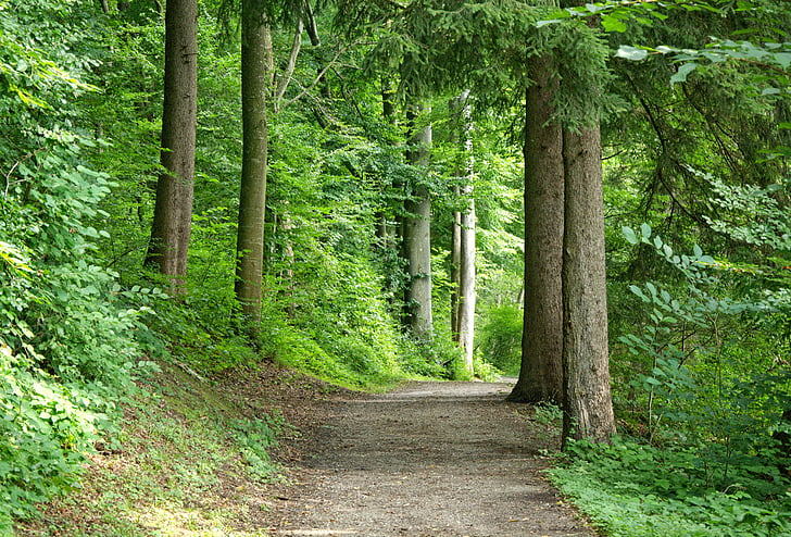 away-forest-forest-path-nature-preview